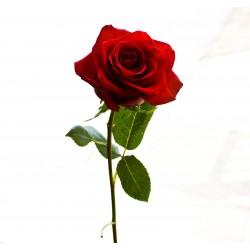 Añadir rosas