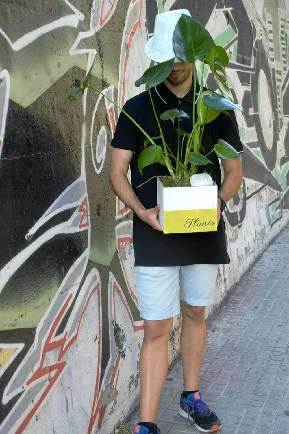 comprar Monstera Deliciosa